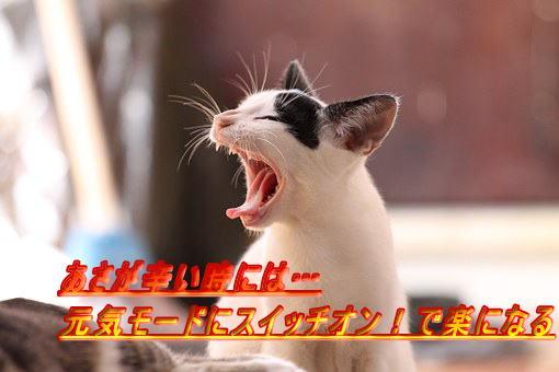 inti(インティ)【エナジーライトinti】で改善…朝起きれない!朝が辛い!午前中が辛い!うつ状態を解消するなら光目覚し時計